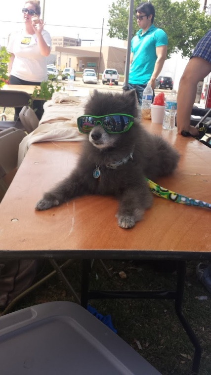 This cool customer is ready for the Mutt Strut