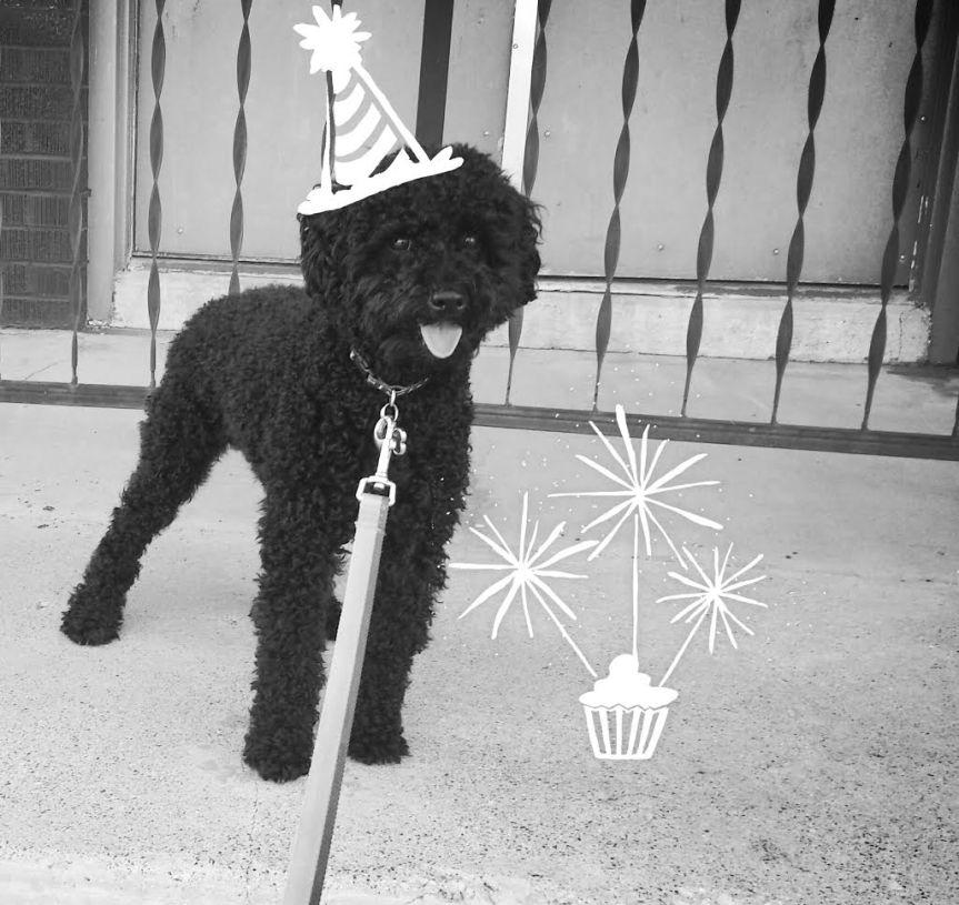 Happy Birthday Pierre!